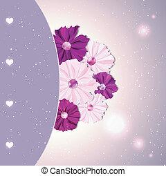 fleur cosmos, printemps, coloré