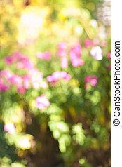 fleur, defocused, jardin
