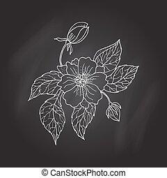 fleur, dessin, pivoine, main