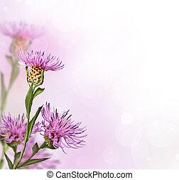 fleur, doux, pré, fond, knapweed