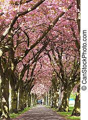 fleur, edimbourg, avenue