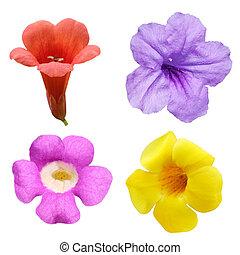 fleur, ensemble, cloche