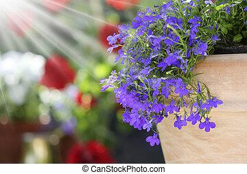 fleur, ensoleillé, jardin, arrangement