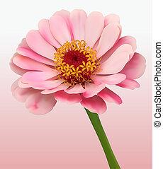 fleur, fleur, fond