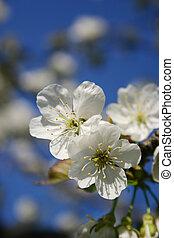 fleur, fleur source, arbre