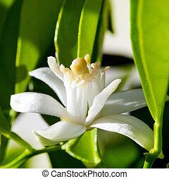 fleur, fleur source, féconder, orange