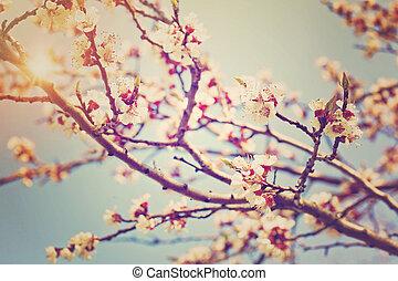 fleur, fleurs, arbre, pêche