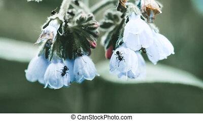 fleur, fond, fourmis, gentil
