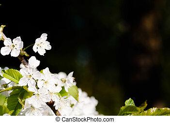 fleur, fond
