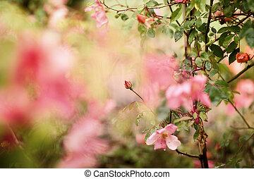 fleur, fond, rose, résumé