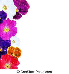 fleur, frontière