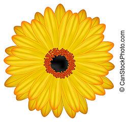 fleur, gerbera