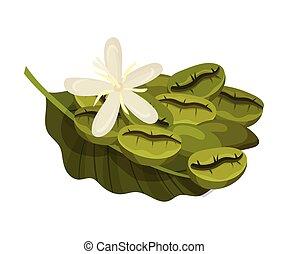 fleur, haricots, illustration, plante, fleurir, coffea, ...