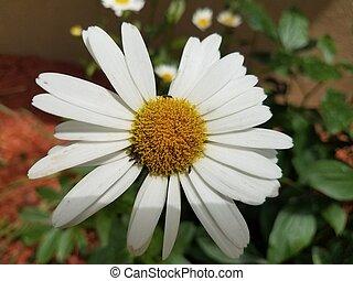 fleur, haut, fourmis, noir, jaune, fin, blanc