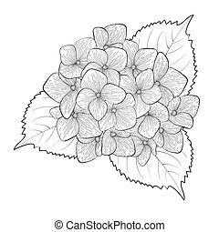 fleur, hortensia, isolé, noir, blanc, monochrome
