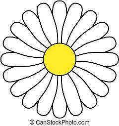 fleur, icon., pâquerette