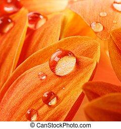 fleur, il, eau, pétales, orange, gouttes