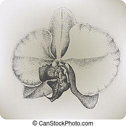 fleur, illustration., drawing., main, vecteur, orchidée