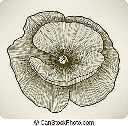 fleur, illustration., drawing., main, vecteur, pavot