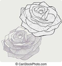 fleur, illustration., vendange, rose, vecteur, hand-drawing.