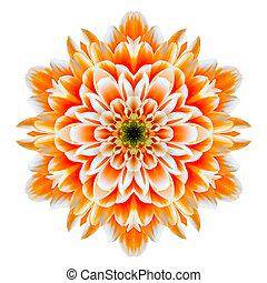 fleur, isolé, chrysanthème, orange, blanc, mandala, kaléidoscope