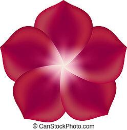 fleur, isolé, illustration, arrière-plan., vecteur, blanc rouge