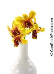 fleur, isolé, jaune, arrière-plan., blanc, orchidée