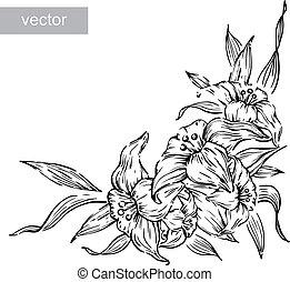 fleur, isolé, vecteur, noir, graver, lis blanc