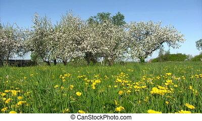 fleur, jardin, pomme