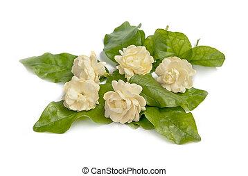fleur, jasmin