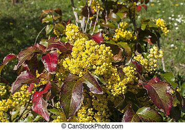 fleur, jaune, printemps, jardin
