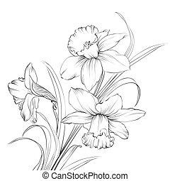 fleur, jonquille, isolé, white., narcisse, ou