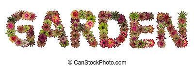 fleur, lettres, jardin, majuscule, isolé, bromeliad, alphabet