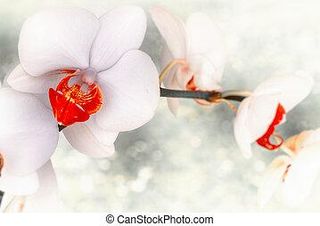 fleur, lumière, arrière-plan., closeup, fond, fleurs blanches, orchidée