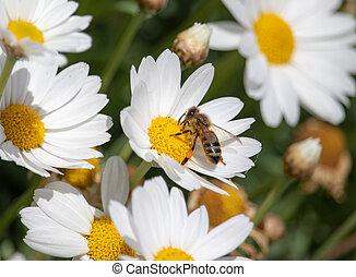 fleur, manger, printemps, abeille, temps, workin