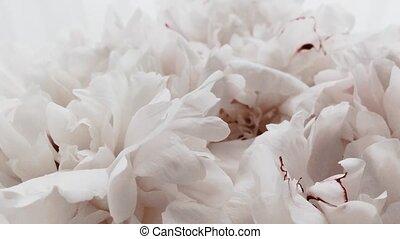fleur, mariage, pastel, fleurs blanches, pivoine, vacances, ...