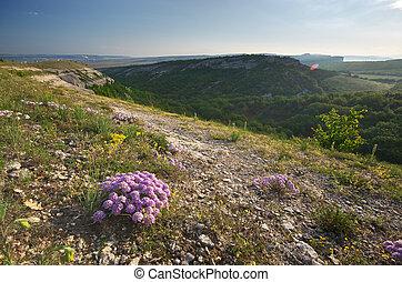 fleur, mountain.
