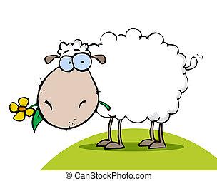 fleur, mouton, colline, manger