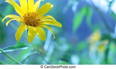 fleur, nature