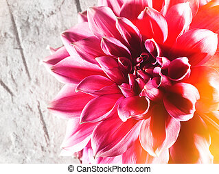 fleur, naturel, backgroungs, beauté, lotus, sur, résumé