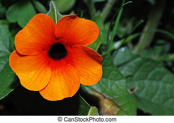fleur orange, rouges