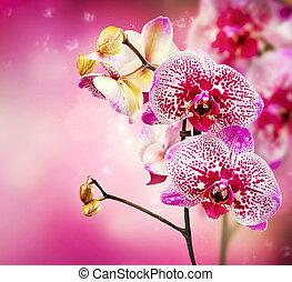 fleur, orchidée
