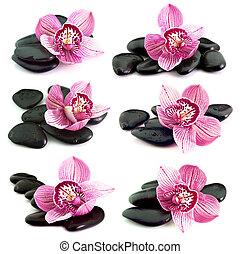 fleur, orchidée, pierres