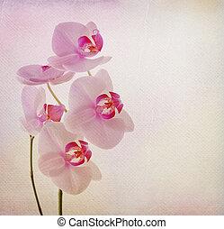 fleur, orchidée, vendange, carte