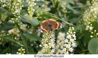 fleur, papillon, spring., bush.