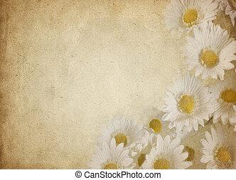 fleur, parchemin