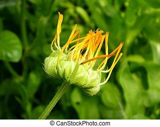 fleur, photographie, brouillé, arrière-plan vert, orange, noir