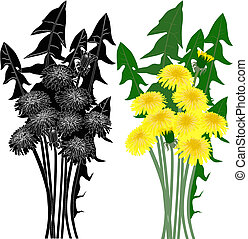 fleur, pissenlit