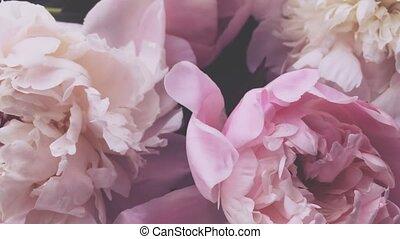 fleur, pivoines, rose, pivoine, vacances, fleurs, arrière-...