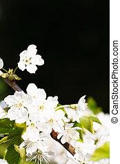 fleur, pomme, copyspace